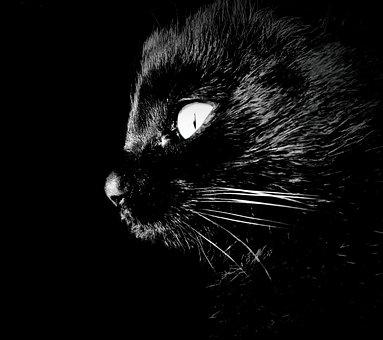 Cat, Intrigue, Darkness