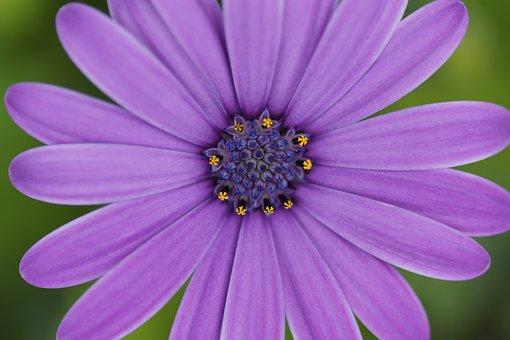 Flower, Green, Plant, Nature, Blossom, Bloom, Spring