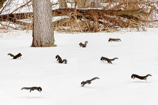 Squirrel, Party, Scurry, Snow, Winter, Ice, White