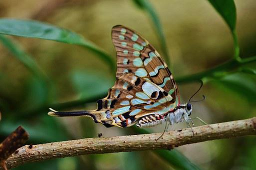 Butterfly, Insect, Colorful, Animal, Nature, Wildlife