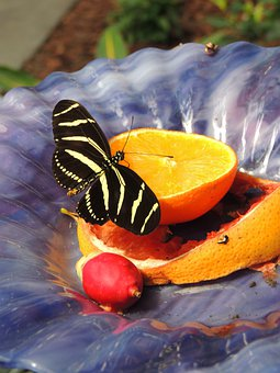 Orange, Butterfly, Insect, Wing, Wildlife, Bug, Bright