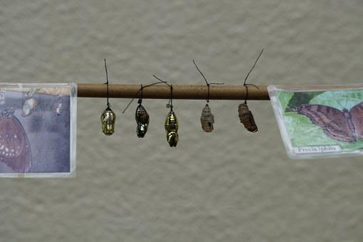 Dolls, Butterfly Dolls, Cocoons, Series, Lined Up