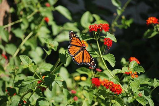 Plant, Flowers, Butterfly, Insect, Wing, Wildlife, Bug