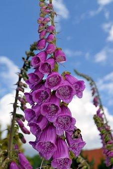 Thimble, Close, Toxic, Blossom, Bloom, Nature