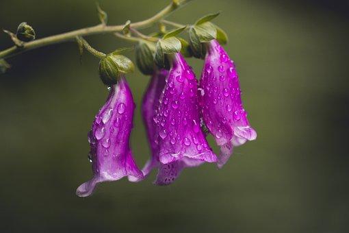 Thimble, Nature, Flower, Close Up, Flowers