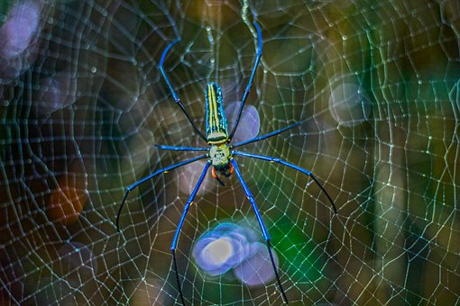 Spider, Poisonous Spider, Colourful, Embankment