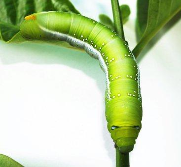 Green, Worm, Closeup, Tree, Stick, Creepy, Poisonous