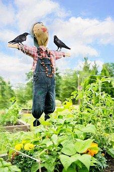Scare Crow, Crows, Garden, Bird, Decoration, Raven