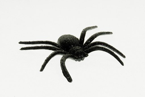 Spider, Deco, Halloween, Decoration, Shock, Scare, Fear