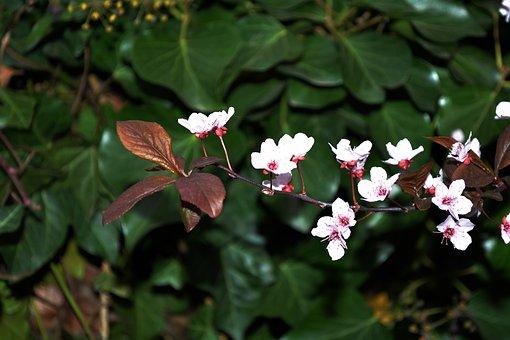Jaro, Florets, Nature, Flowers, Carnation, Flowering