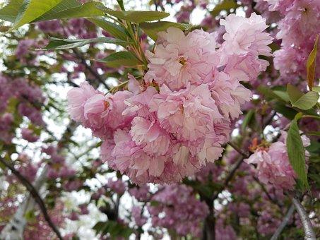 Flower, Pink, Pink Flowers, Petal, Macro, Spring