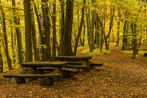 Forest, Bench, Table, Outdoor, Hill, Landscape, Wood
