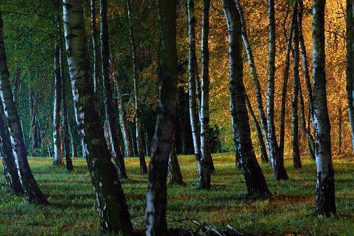 Night, Forest, Park, Light, Grass, Ditch, Shadows