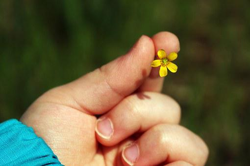 Floret, Bimba, Manina, Hand, Delicacy, Spring, Kindness