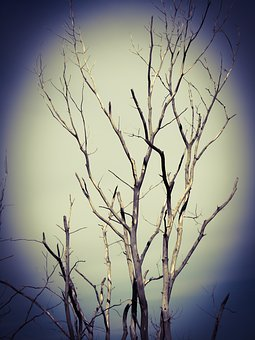 Tree, Scary, Dark, Horror, Chilling, Haunted