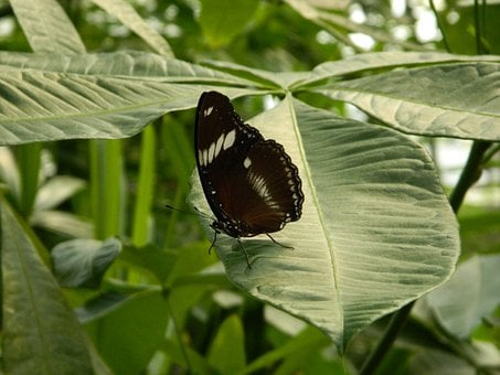 Butterfly, Insect, Large, Leaf, Plant, Wing, Wildlife
