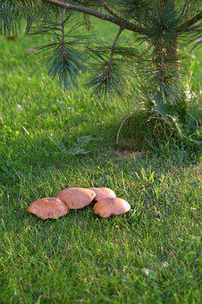 Mushrooms, Meadow, Polyana, Nature, The Collection Of
