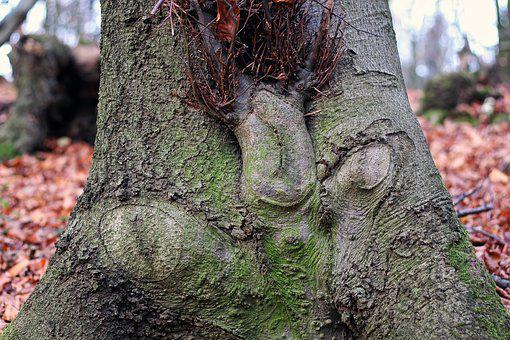 Tree, Funny Face, Forest Spirits, Tree Bark, Nature