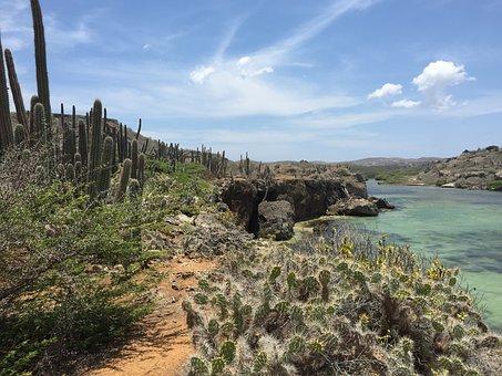 Curacao, North Coast, Boca Ascension, Cactus Landscape