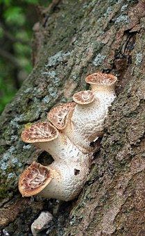 Mushroom, Toadstool, Poisonous, Nature, Autumn, Fungus