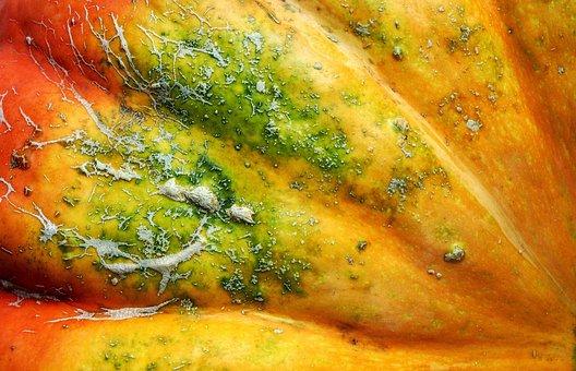 Squash, Pumpkin, Potimarron, Detail, Skin, Scar