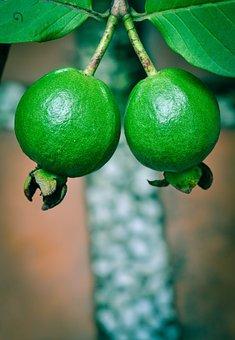 Guava, Green, Fresh, Fruit, Nature, Natural, Sweet