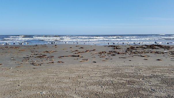 Beach, Beaches, Seagull, Ocean, Summer, Bird, Water