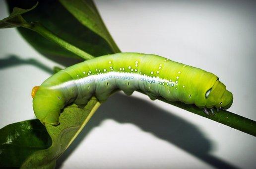 Green, Worm, Stick, Creepy, Poisonous, Nobody