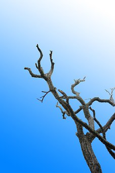 Lonely Tree, Dried Branch, Blue Sky, Clear Sky, Tree
