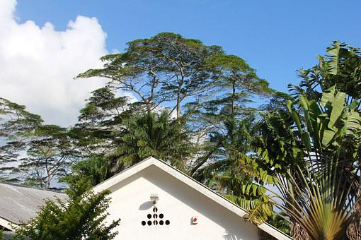 Tree, Crown, Roof, Home, Top, Date Palm
