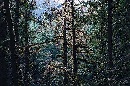 Woods, Forest, Landscape, Nature, Tree, Light, Autumn