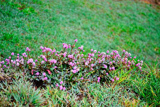 Flowers, Blossoms, Park, Nature, Garden, Nuwara Eliya