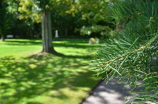Pine, Pine Needles, Needles, Macro, Tree, Wood