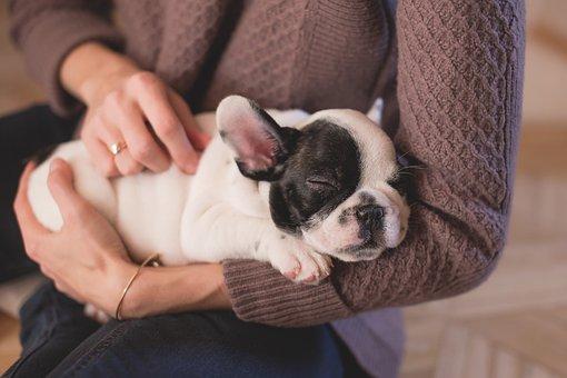 Bulldog, Puppy, Pet, Owner, Woman, Sleep, Sleeping