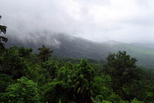 Rainforest, Mollem National Park, Western Ghats