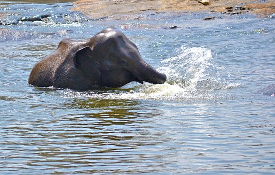 Elephant Baby, Playing In Water, River, River Bath
