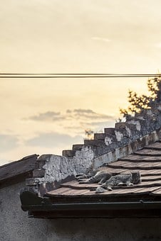 Cats, Sleeping, Rooftop, Rural, Rustic, Town, Animal