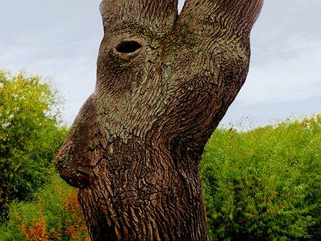 Tree, Log, Face, Fantasy, Tree Spirit, Tree Essence