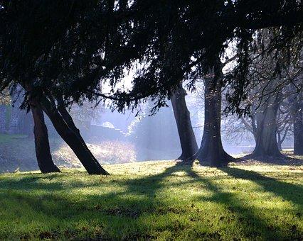 Wood, Shadows, Trees, Grass, Light, Forest