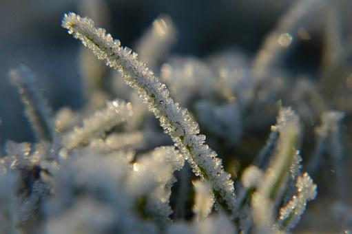Frost, Snow, Ice Crystals, Winter, White, Ice, Nature