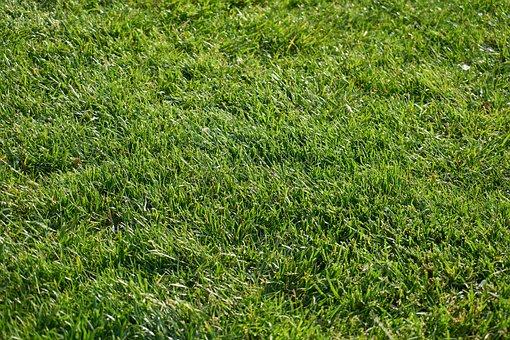 Nature, Green, Grass, Background, Texture, Macro