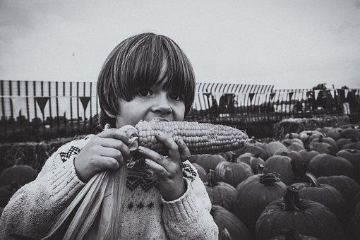 Child, Boy, Kid, Eating, Corn, October, Farm, Little