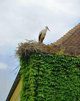 Roof, Ivy, Bird On Roof, Nest, Crane, Bird, Fly, Wings