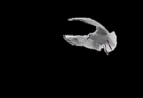 Pigeon, White, Bird, Dove, Nature, Peace, Symbol
