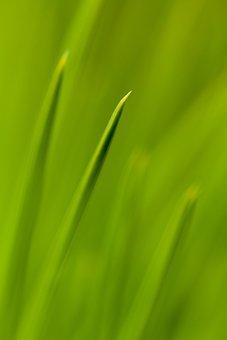 Abstract, Close-up, Coniferous, Evergreen, Fir, Flora