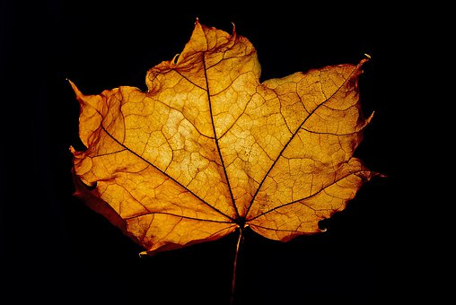 Leaf, Leaves, Macro, Background, Season, Color, Brown