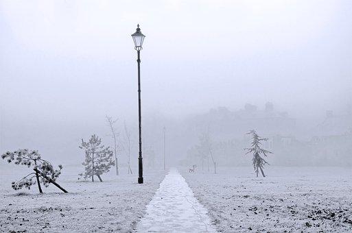 Winter, Branch, Snow, England, Seasons, Nature, Macro