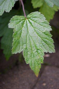 Leaf, Green, Green Leaf, Leaf Structure, Garden, Plant