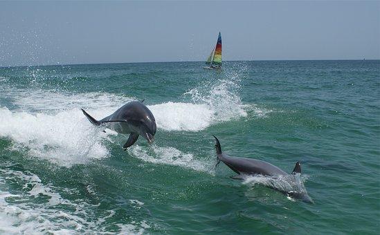 Dolphins, Ocean, Marine, Jumping, Sea, Aquatic, Splash