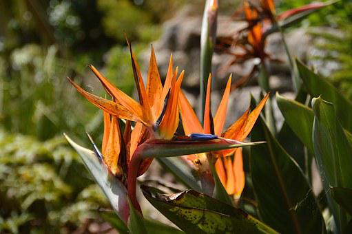 Exotic Flower, Orange, St Michaels Mount, Penance